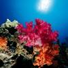 Gorgonia – Mar Rosso