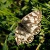 Piane di Castelluccio – Farfalla