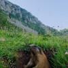 Marmotta – San Martino di Castrozza