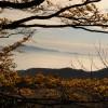 Faggeta in autunno – Monte Cucco